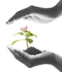 sustainable.development