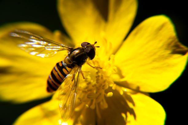 Μαζική εξαφάνιση ειδών, κλιματική κρίση, πανδημίες: η τελευταία προειδοποίηση για να αλλάξουμε